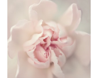 Nature Photography PRINT, Pale Rose, Wall Art