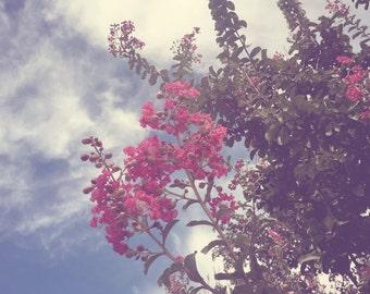 Floral Photograph - fine art print - nature photography - pink flowers - living room decor