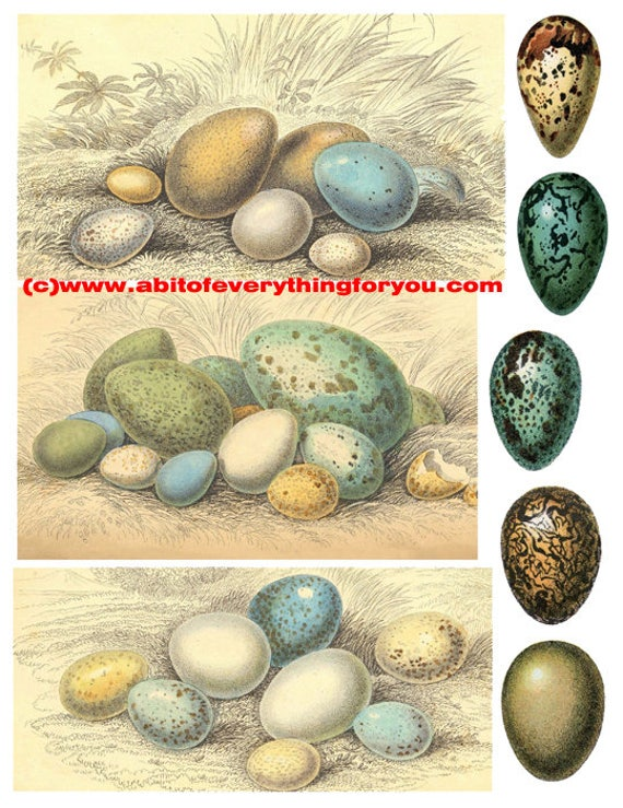 vintage bird egg illustrations clipart digital download die cuts craft cut outs sheet graphics images nature printables