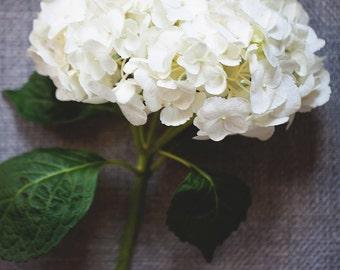 Hydrangea Print - Hydrangea Art, Flower Photography, floral decor, fine art photography, white hydrangeas, art & Collectibles, photography
