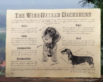 Antique styled dog standard - Dachshund wire-haired