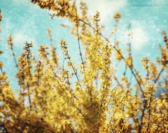 Yellow Flower Print or Canvas Art, Nature Print, Golden Forsythia, Aqua Sky, Surreal Nature Art, Dreamy Nature Print, Blossom.