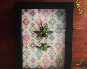 Green Stag Beetle Pair // Framed Insects // Bohemian Decor // Eclectic Decor // Beetle Display