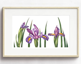 Watercolor Flower Print - Iris Flower Botanical Contemporary Art Painting by Sally Jacobs - Purple Green Yellow