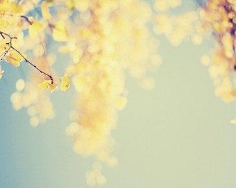 Nature Photography, Tree Photography, Bokeh Photography, Yellow, Green, Blue, Birch Tree Photo, Autumn Photo, Fall Photo, Gold, Bokeh