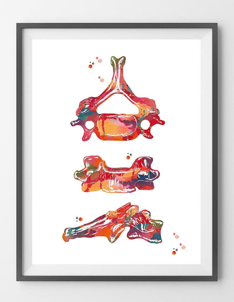 Sechsten Halswirbel Aquarell Druck Anatomie Kunst C6 Plakat