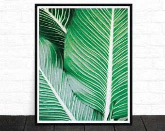 Palm Print, Printable Art, Minimalist Wall Decor, Plant Print, Tropical Art, Leaf Print, Green Leaf, Modern Photography, Tropical Decor
