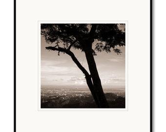 Black and white photography, sepia prints, Cebu City Philippines, skyline city view, tropical island tree, landscape photography, Filipino