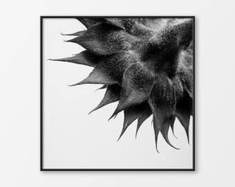 Black and White Photograph, Sunflower, Flower Photography, Scandinavian Art, Minimalist Art, Botanical Art, Floral Wall Dcor