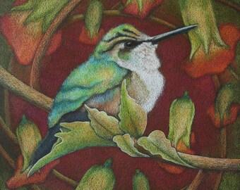 Humming Bird- Last of Summer's Hummer