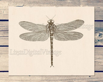 Instant download printable art, Dragonfly print, Wall art vintage, Dragonfly art, Insect art, Antique print, 11x14 print; 8x10 print, JPG