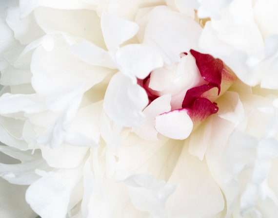 White Peony Print, Peonies Photo, Macro Flower Art, Spring Wall Decor, Floral Photograph