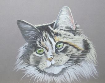 Grey tabby cat shag - animal Art - animal Pastel