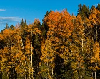 Autumn Hill Canvas Print