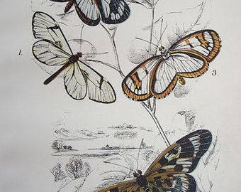 Fine Original Antique Chromolithograph butterflies 1897