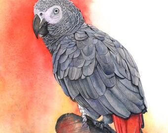 Grey Parrot print of watercolor painting  GP2415 smallest 5 by 7 print wall art print - bird art - art print - wildlife print