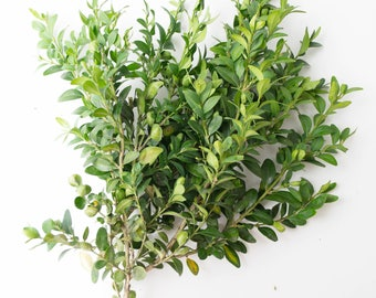 Boxwood, dried boxwood branches, the natural branches, home decor, home decoration, dried plants