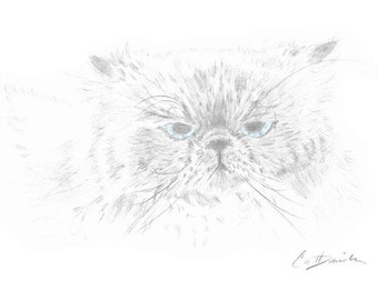 "Himalayan Cat Pencil Drawing Original Hand Drawn Art 8.5""x 11"" Print Mother's Day Gift Birthday Present Cat Lovers Cat Portrait CatDKnits"