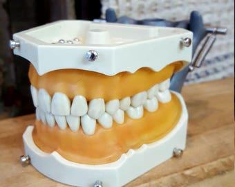 Dentoform teeth