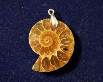 Ammonite Fossil Shell Pendant Opalized