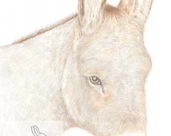 Willow the Donkey - Blank Card