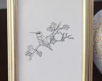 Hummingbird Drawing, reproduction from original ink drawing