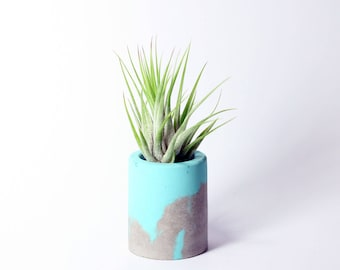 Air Plant & Holder Gift Set // Tillandsia Scaposa with Concrete Pot // Hello Tilly AirPlant