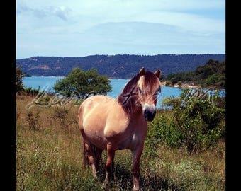 Photo 30X40cm horse in a field near Lake St. Croix