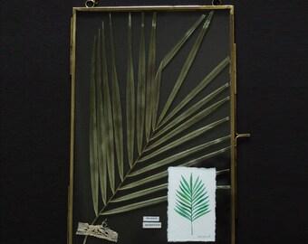 "Herbarium - Glass frame - pressed flower - dry flower - botanical - botanical drawing - ""Phoenix"""