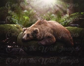 Lazy Bear Digital Backdrop