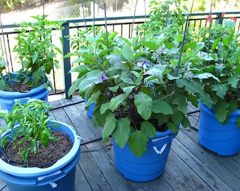 Container Garden Plant Sampler, 6 Plants