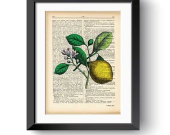 Lemon print-kitchen wall art-lemon dictionary print-lemon wall art-wedding gift-home decor-lemon decor-fruits print set-NATURA PICTA-DP170
