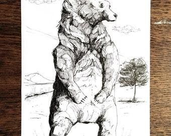 Bear - Hand Drawn A4 Illustration