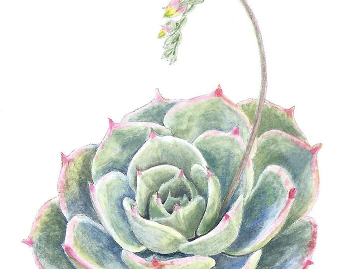 207 Succulent 1 Card