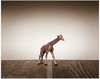 Nursery Decor, Baby animal art, Baby room ideas, Safari animals, Baby Giraffe One Photo Print