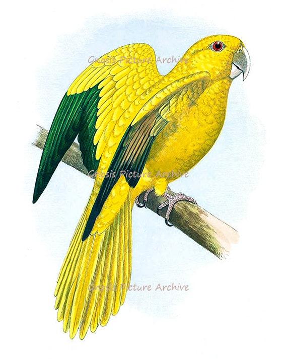 Vintage Bird Prints Tropical Birds Decor Parrots Bird Wall