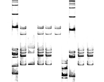 Electrophoresis 8, DNA art, Science, Science art, science gift, biology, science print, dna print, black and white art, abstract watercolor