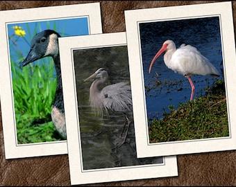 3 Bird Photo Note Cards Handmade Set - 5x7 Bird Note Card - Blank Note Cards Handmade - Photo Greeting Cards Handmade With Envelopes (BD15)