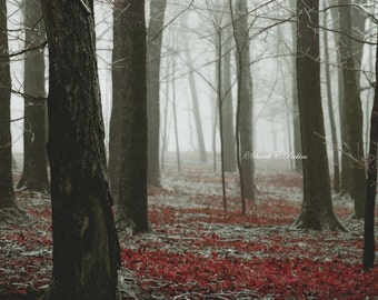 Enchanted Forest Photo-Ethereal Wall Art-Horizontal Print-Nature Photo-Brown & Red-Lustre Print-Tree Trunk Photography-Dark Forest Wall Art