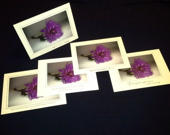 Photo greeting card, purple petals.