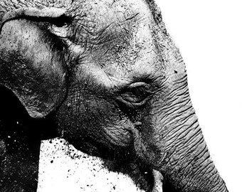 Animal Photography - Elephant Photo Black and White II, 24x36 20x30 16x20 8x10 5x7 fine art wall decor nursery wall art grey animal portrait