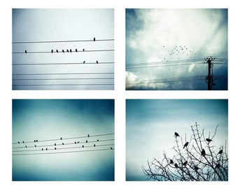 birds photography set of 4 nature photography prints 8x10 8x12 fine art photography winter birds on wire photography birds flight teal blue