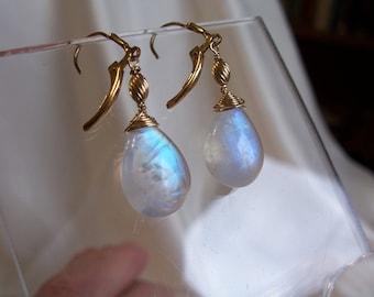 Rainbow moonstone 15.9mm x 11.7mm briolette leverback earrings AAA 14k gold filled handmade gemstone MLMR item 744