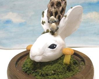 white rabbit head ink cap and morel mushroom pink bunny ear cloche terrarium