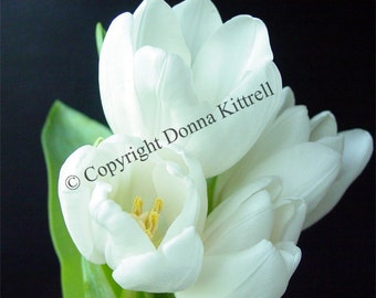 White Tulips Fine Art Photograph, Black and White, Spring Flowers