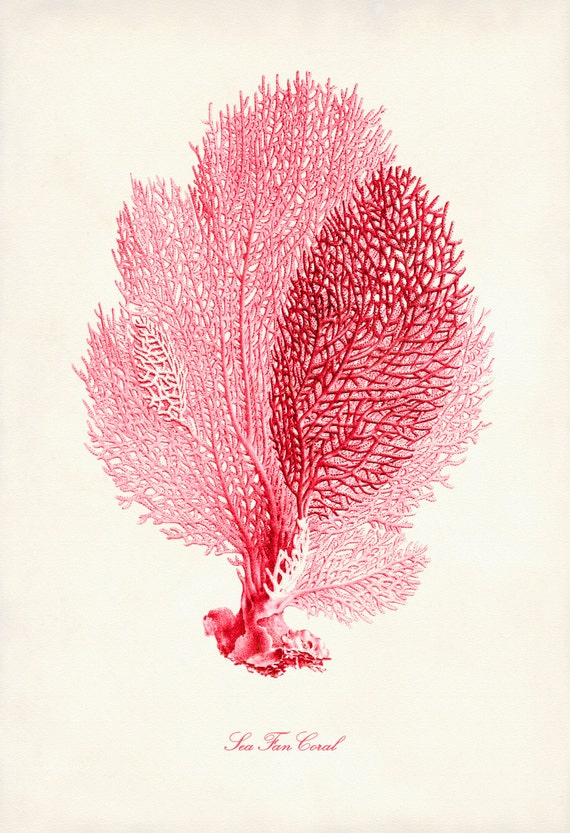 Coral pink sea fan coral print poster of pink coral beach publicscrutiny Images