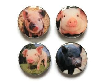 Pig magnets or pig pins, piglets, refrigerator magnets, fridge magnets, office magnets