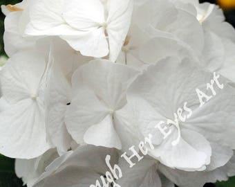 All White Hydrangea Flower Photo - Summer Flower Photography Wall Decor