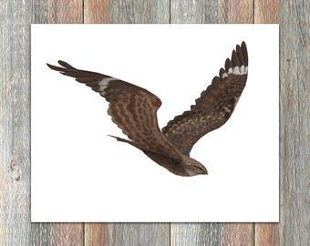 Common Nighthawk Bird Print