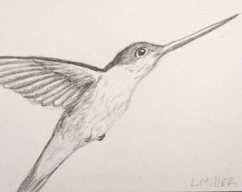 Hummingbird ACEO Card with Magnet Frame, Original Graphite Drawing, Bird Art, Bird Sketch